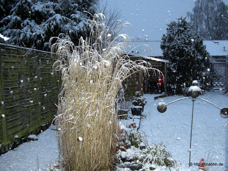 Depth in the Garden with Snowfall before 2 Years
