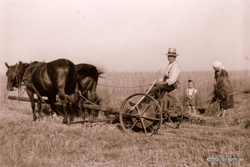 Getreideernte 1940
