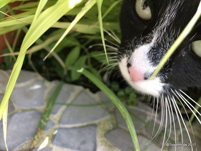 Katze im Jagdmodus