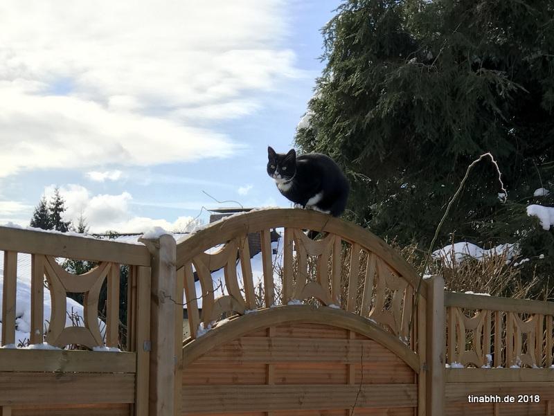 Besuchskatze auf Zaun