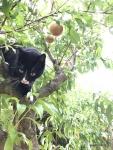 Katze im Pfirsich